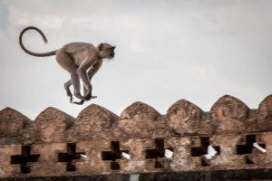 Monkey business - Photo by Stephen Reid