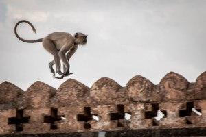 Monkey business - Photo by Stephen Reid